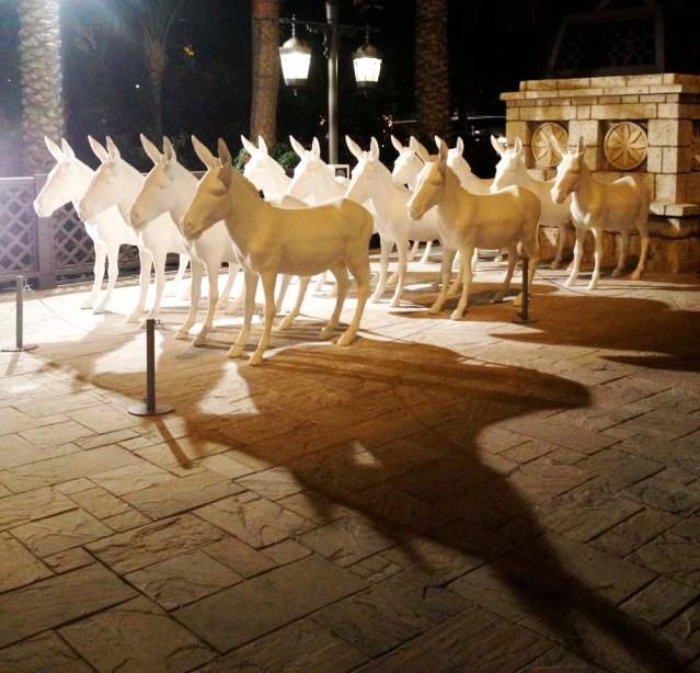 ehsan ul haq's 12 donkeys,