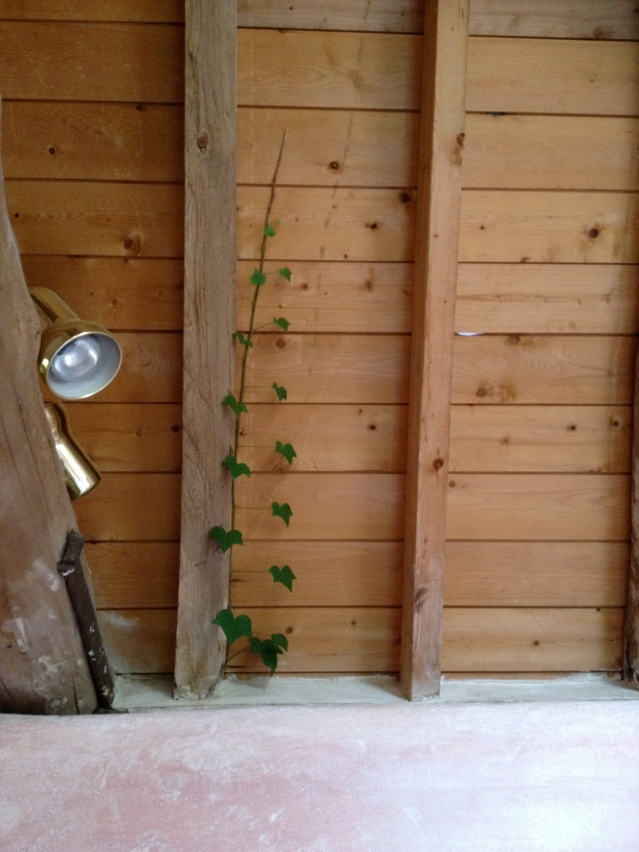 and look at this. isn't it the most charming thing you've ever seen? a vine wants to share my bedroom