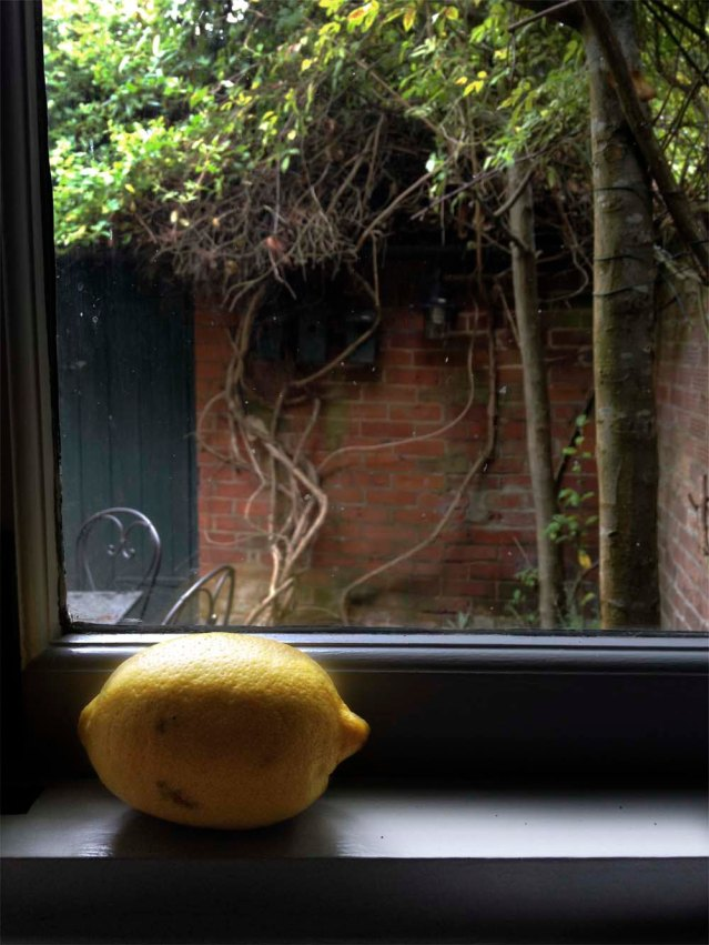 and this lemon looking out onto the garden