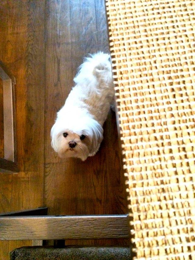 roxy wants some brocolli