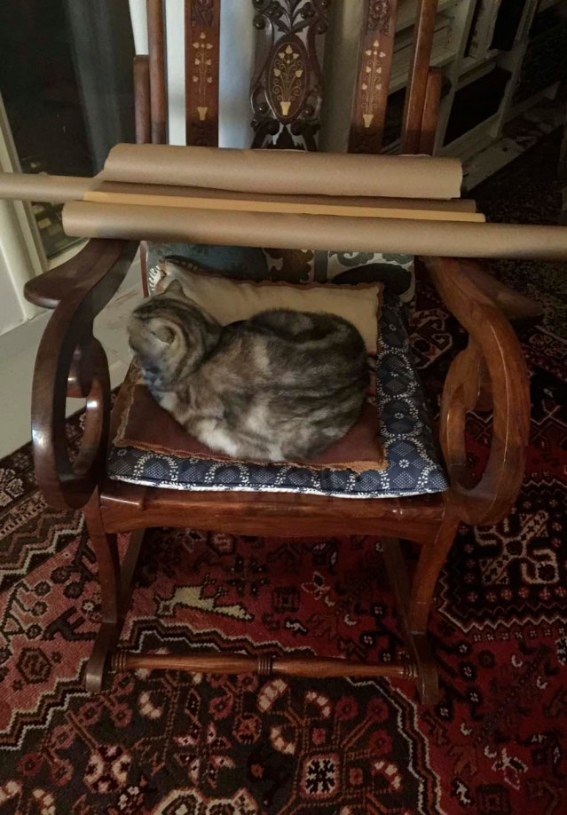and this is tuna. i babysat her once before, two summers ago. here she's taken over yousef's rocking chair