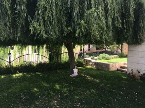 Here she soaks in the earth under Khaldouni's Willow.